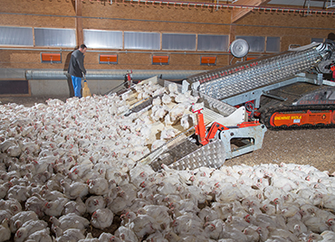 Chicken Harvesting Machine for Broiler Farms